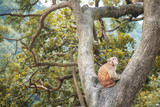 Monkey on tree in a forest - 232051097