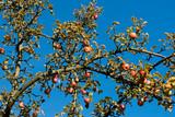 Straßenäpfel
