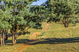 Path through pasture in Upper Hunter, NSW, Australia. - 232057048