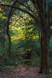 Beech Trees in Autumn - 232067263