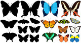 set of beautiful multicolored butterflies and silhouette