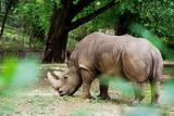Rhinoceros behind foliage, Mysuru - 232075076