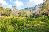 Scenic landscape of Periyar National Park, Thekkady, Kerala, India.