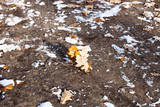 fallen oak leaves and snow on ground of park
