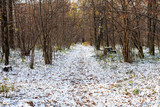 pathway in forest of urban park covered with snow - 232109428