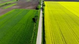 Aerial shot of an amazingly yellow rape-flower field separated by a straight road - 232109850