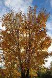 Arbre en automne - 232114215