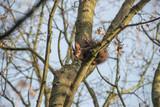 Eichhörnchen auf einem Baum - 232115646