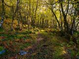 Follow the narrow woodland path down the hillside. - 232117259