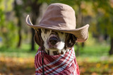 Dalmatian dog in a brown cowboy hat and plaid against the backgr