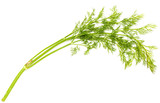 Green leaves of dill on a white background - 232121849