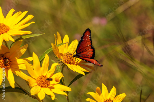 butterfly on wild flower - 232124653