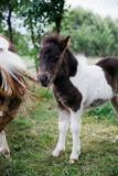 Pony horses on the farm - 232136061