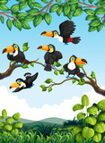 Group of toucan in nature - 232146453