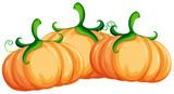 Pumpkin on white background - 232147094