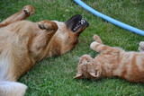 Cat and dog playing tenderly in the grass - 232156223