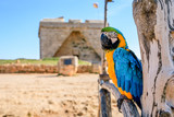 Colourful wild ara parrot