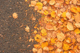 Yellow autumn leaves on asphalt road - 232162264