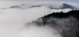 Mountain ridge with clouds flowing through the pine trees. Foggy Landscape. - 232190407