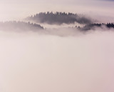 Mountain ridge with clouds flowing through the pine trees. Foggy Landscape. - 232190490
