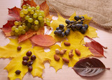 Nuts, black and white grapes, red and yellow leaves on the table