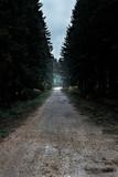 Empty path in dark forest. - 232194002