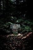 Historic tombstone in dark forest. - 232194009