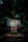 Historic tombstone in dark forest. - 232194010