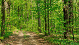 Forest trees. nature green wood sunlight backgrounds - 232210251
