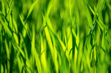 green grass background with selective focus - 232210602