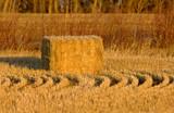 Hay Bales and rows - 232213872