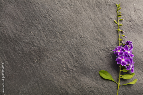 Purple and pink flower on the grey background with copy space , top view
