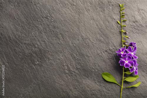 Purpury i menchie kwitną na szarym tle z kopii przestrzenią, odgórny widok