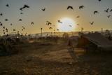 インドのプシュカル ラクダ祭り期間中のラクダの群れと野鳥の群れ 美しい朝日と砂漠