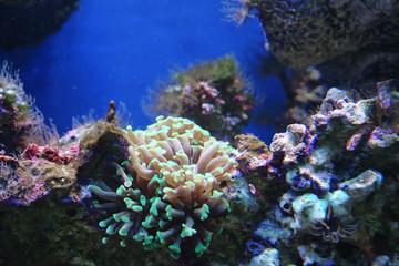 Marine reef dwellers
