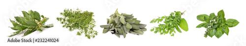 Leinwandbild Motiv Set of fresh herbs hanging  on an isolated white background