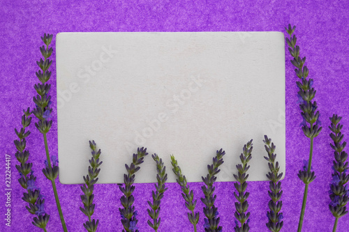 Lavender. White blank  and fresh lavender flowers on bright purple background.top view, copy space. Lavender Mockup. - 232244417