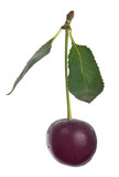 single cherry berry with two leaves on white