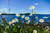 flowers on the beach, in Sweden Scandinavia North Europe