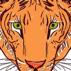 Tiger head Sketch drawing. Black contour on a white background. Vector © ekaterina_p