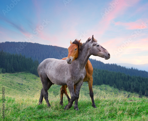 Two horses hugging under pink morning sky