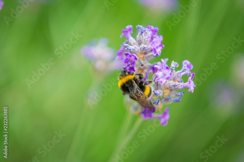 Sticker The Bee