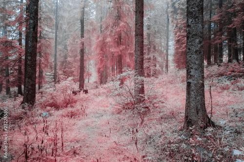 Forêt dans le brouillard en infrarouge. Rose - 232265855