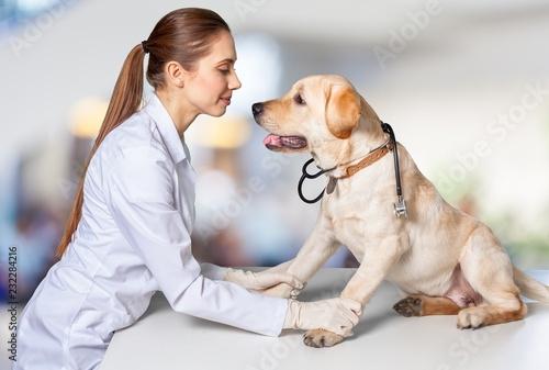 Fototapeta Woman veterinarian.