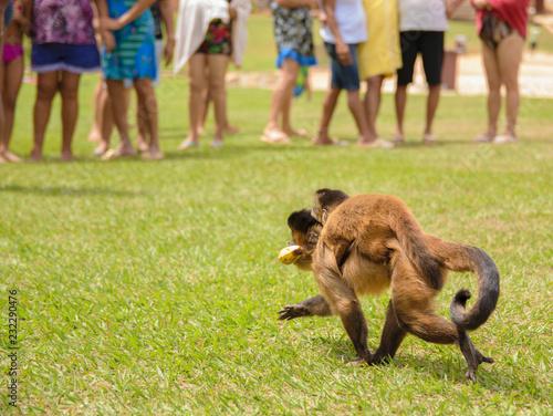 Fridge magnet Macacos na sociedade