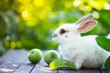 rabbit and Apple