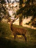 cervo maschio delle dolomiti - 232313654