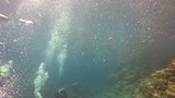 Diving inside sardines bait ball of fish - 232315082