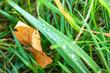 Leinwandbild Motiv dew drops on a blade of grass