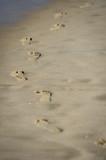 Man footprints in the sand on a beach - 232320212